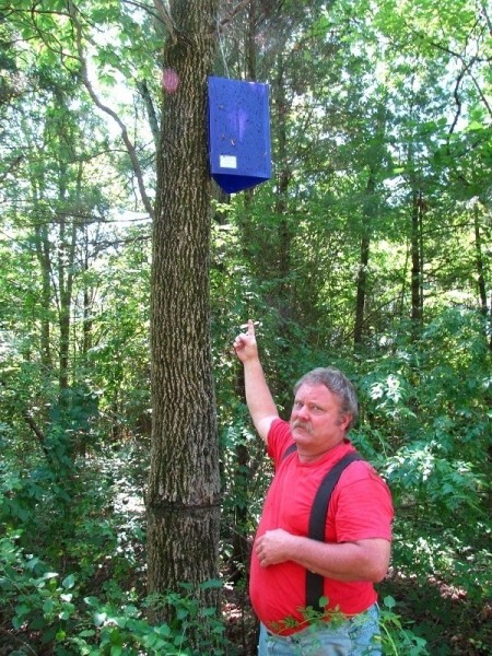 Emerald ash borer sticky trap